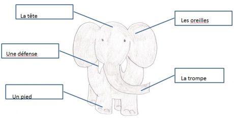 Worksheet solution - elephant parts